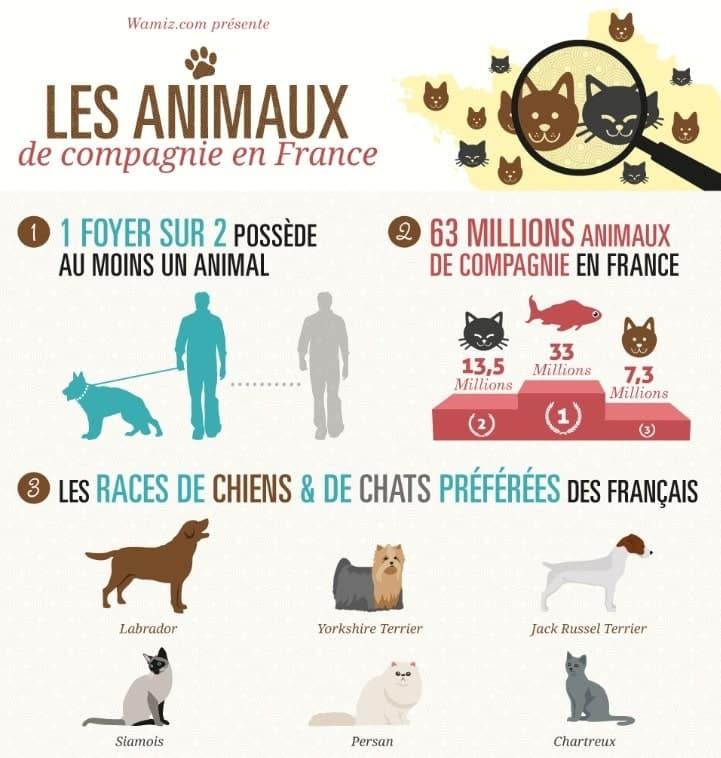 chiffres animaux de compagnie en France