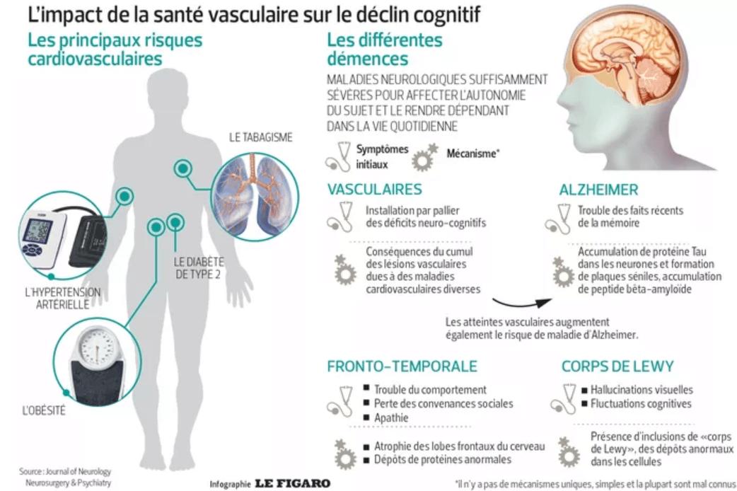 Infographie représentant l'impacte de la santé vasculaire d'une personne et son lien avec les troubles cognitifs